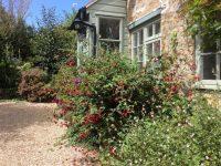 Garden Chiddy Nook